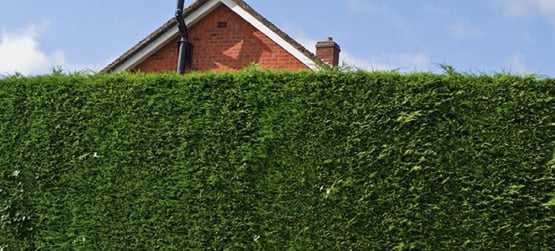 hedges out the front of a house